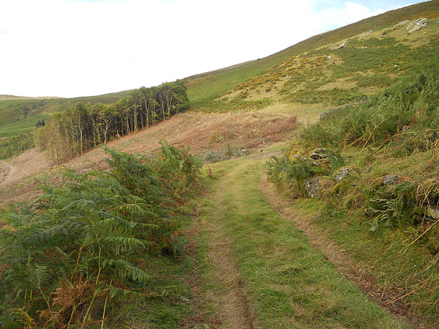 Forest clearance near the sheepfold