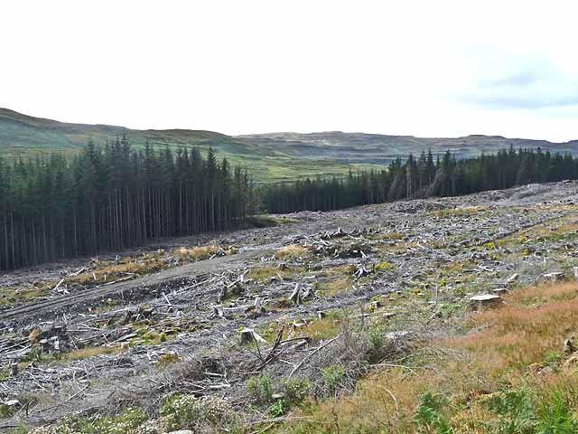 Clear felled forest in Glen Bellart