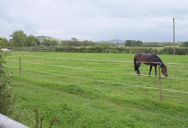 Pasture by Castle Lane