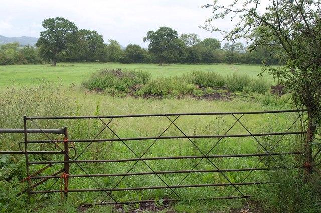 Field by Wetmoor Lane