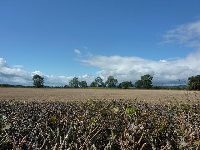 Tumulus in a field