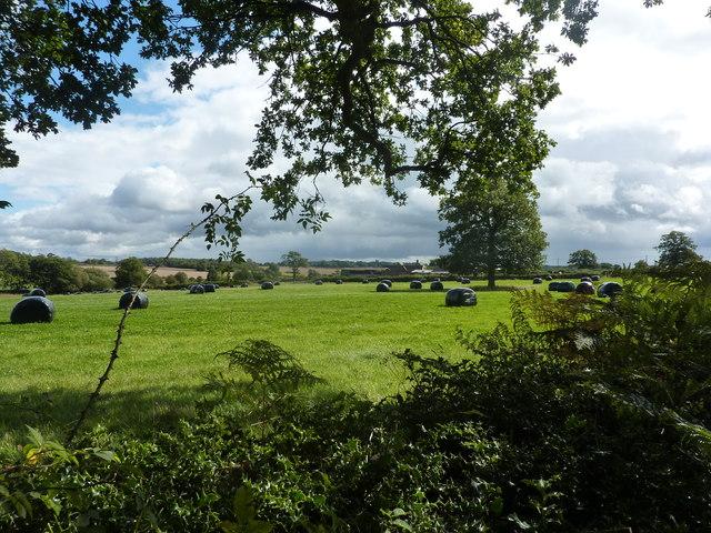 Osmaston Fields Farm