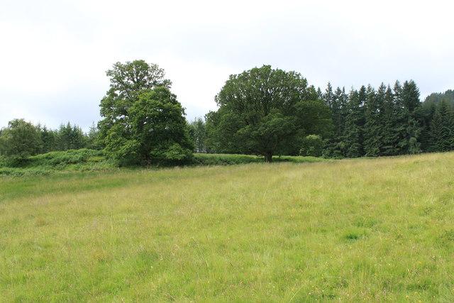 Lower  Hatton Oaks