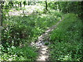 ST6363 : The footpath crosses a small stream in Lord's Wood by James Ayres