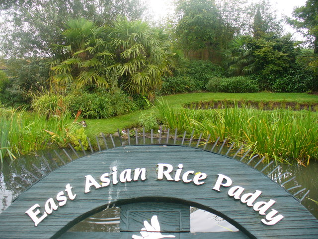 East Asian Rice Paddy