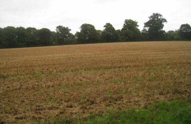 Cultivated corner of Steventon Park