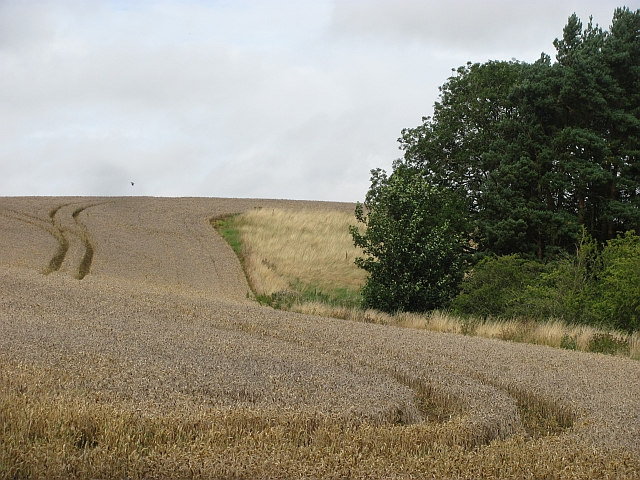 Wheat, Newtonlees