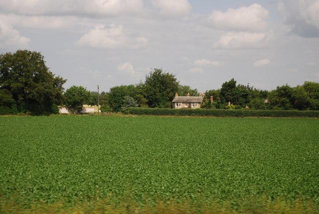 Farmland by the A11, Barton Mills