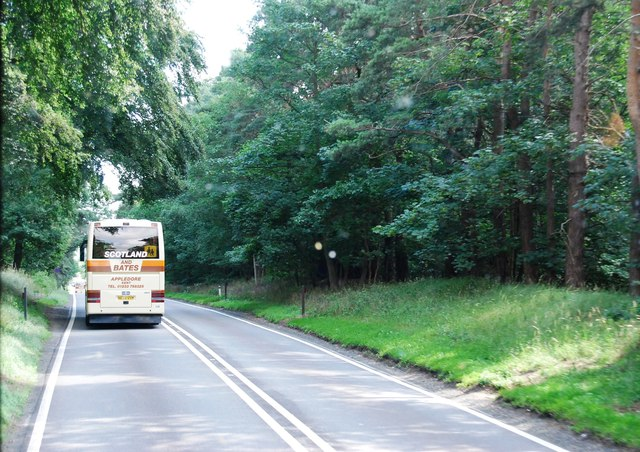 A11 in Mildenhall Wood