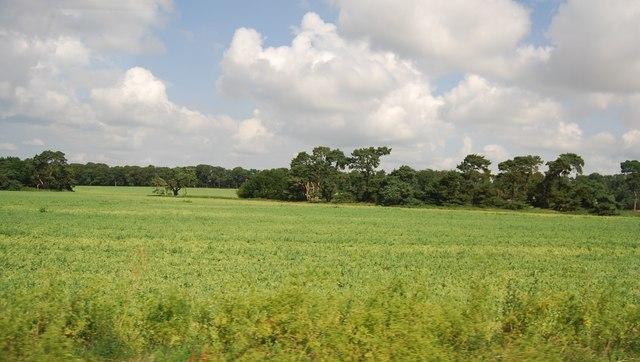 Farmland by the A11