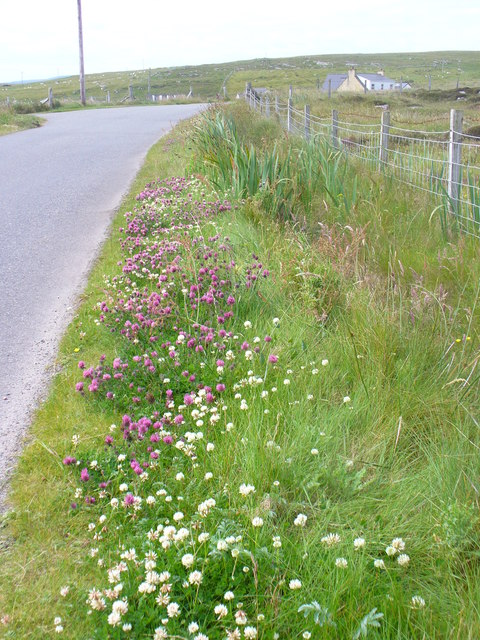 Roadside Verge in Borve