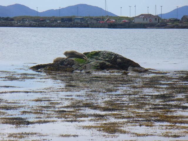 Seal in Loch a' Bhàigh