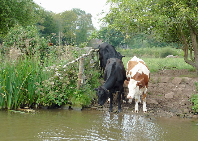Canalside grazing above Meaford Locks, Staffordshire