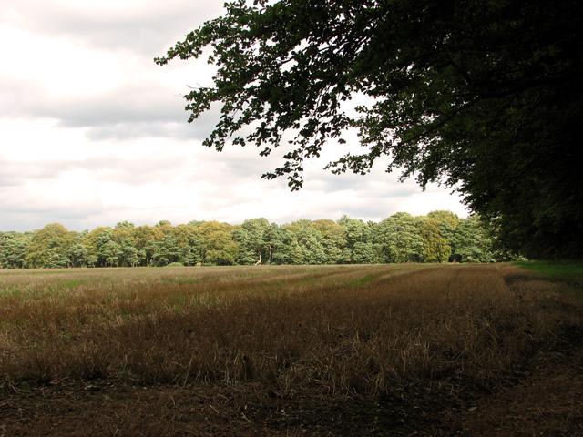 Harvested field north of Gravelpit Plantation, Gayton