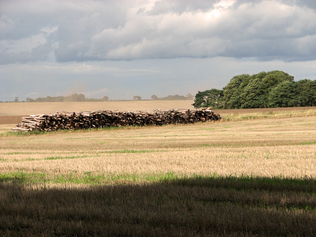 Stack of logs by Long Belt, Gayton