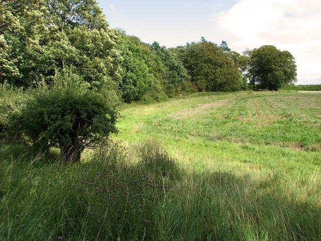 Field-woodland boundary, Gayton