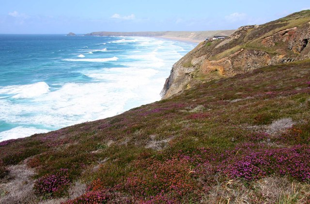 Heather on the cliffs