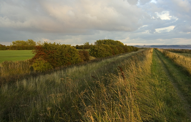 Humber footpath near Brough