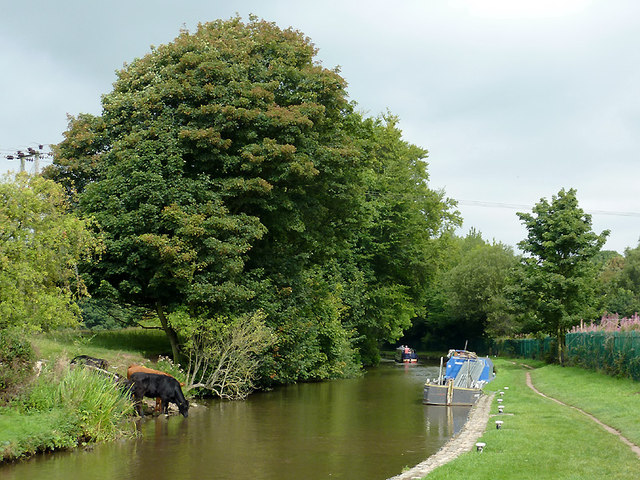 Trent and Mersey Canal above Meaford Locks, Staffordshire
