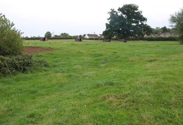Field on edge of Wedmore