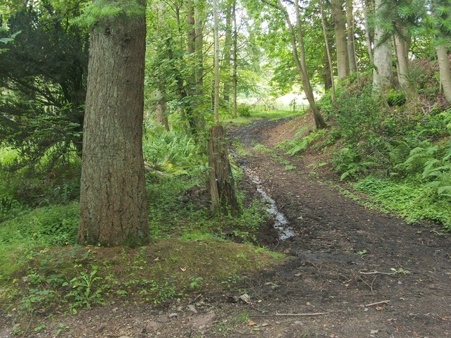 Path in Overtoun Estate