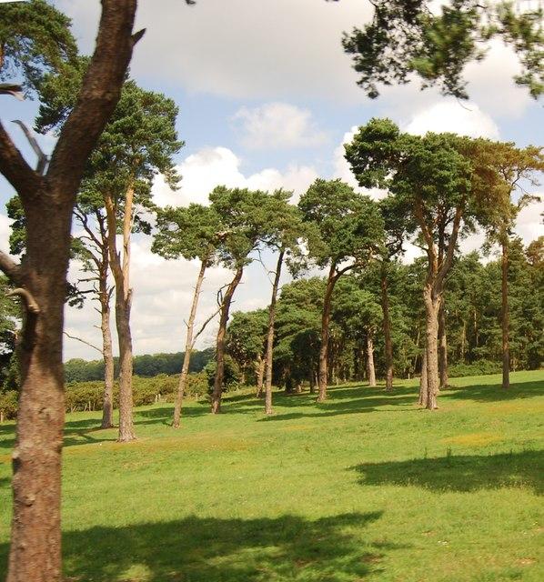 Trees near Elveden War Memorial