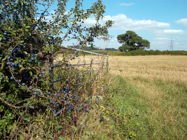 Sloes by the Gate