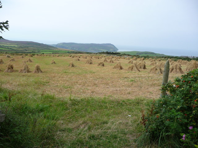 Cornfield at Cregneash