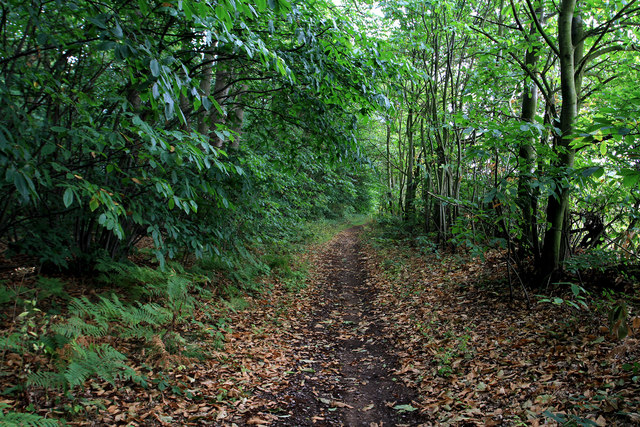 Robin Hood Way in Gleadthorpe Breck Plantation