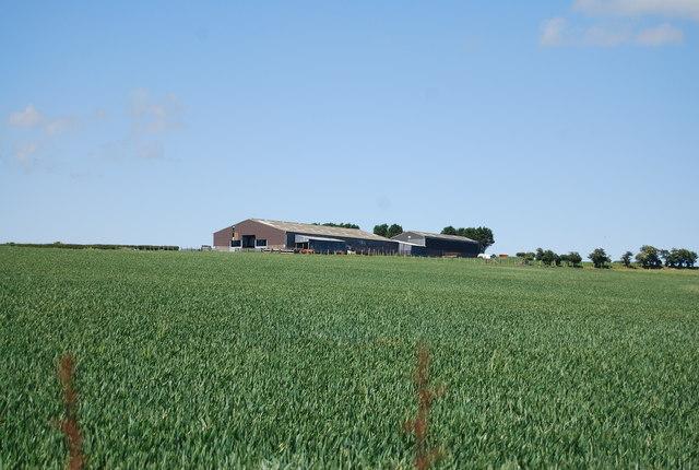Barn amongst wheat fields