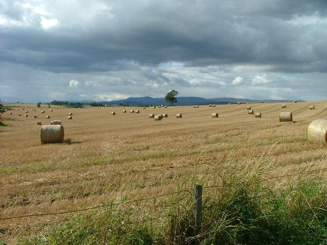 Straw bales at Chapelhill