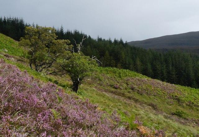 Hillside above Achnanellan