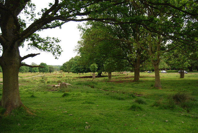 Trees in Richmond Park