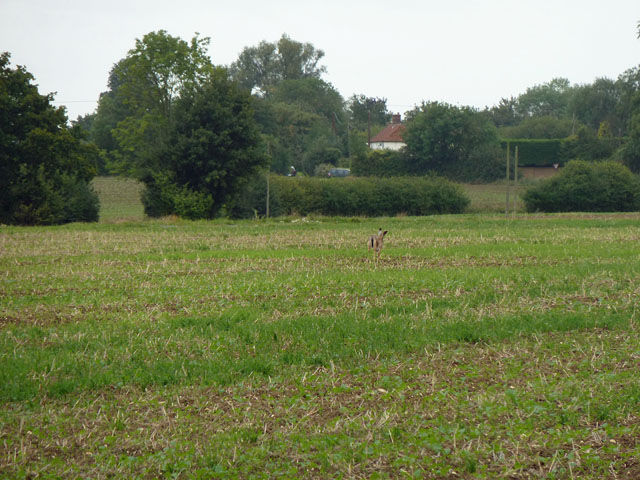 Hare today, gone today