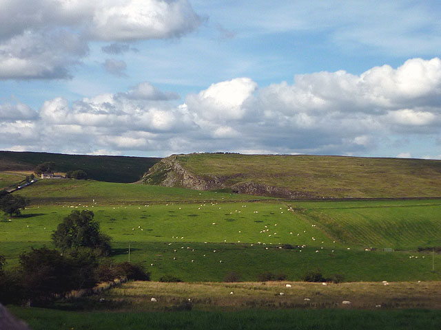Sheep, Brackie's Burn
