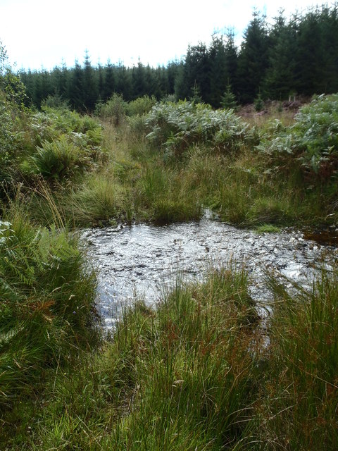 The Anstrool Burn flows over old forest track