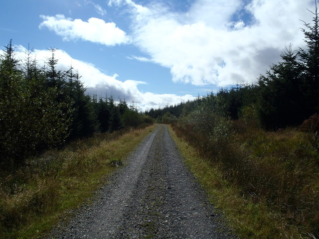 Forest track near Thorny Hill, Laurieston Forest