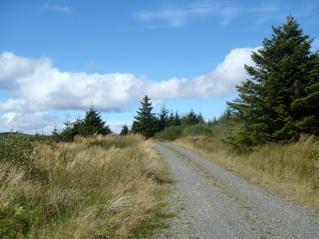 Forest track near Bankben, Glengap Forest