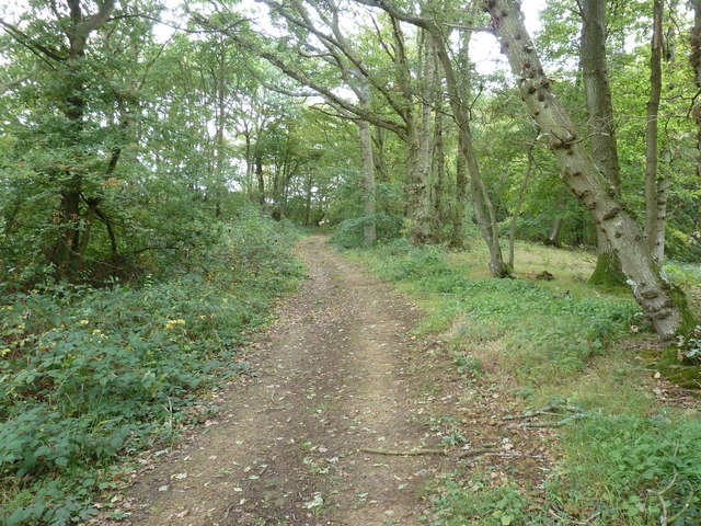 Bridleway approaching Great Home Wood