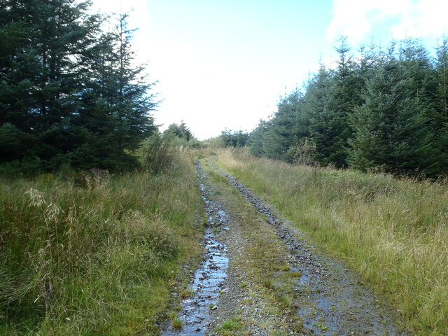 Forest track in Glengap Forest