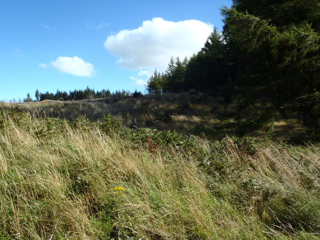 Ruined dyke in Laurieston Forest