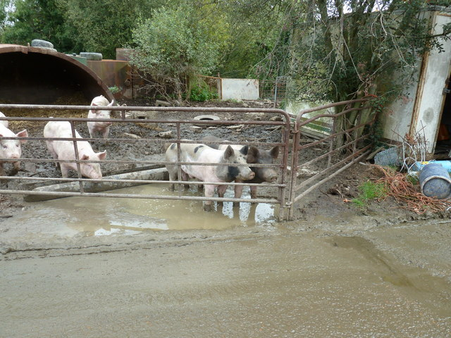 Pig pen alongside footpath on Bower Farm