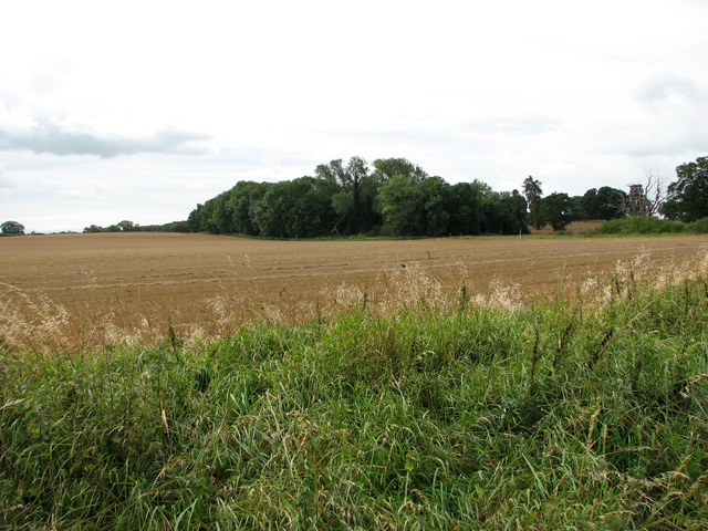 View across harvested field towards Conduit Plantation, Middleton