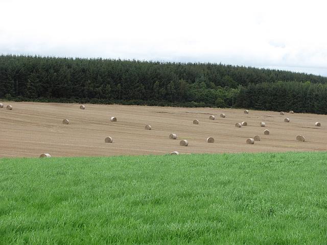 Bales near Huntlywood