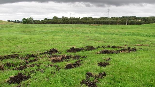 Peaty soil, Gordon Moss