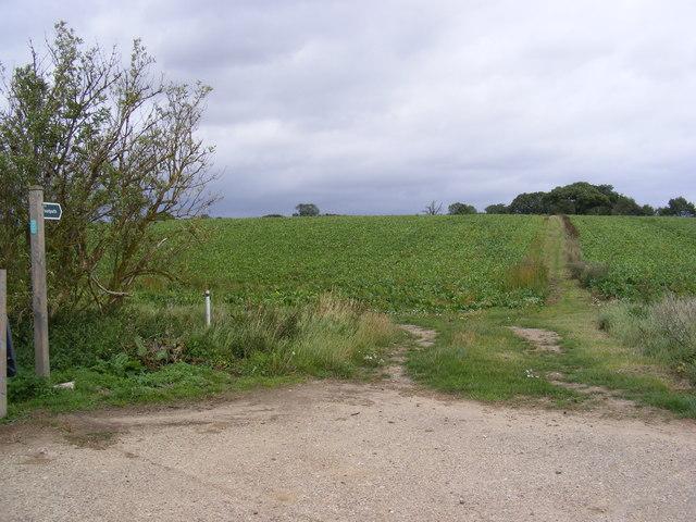 Footpath to Church Lane