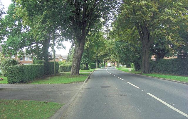 Appledore Road avenue