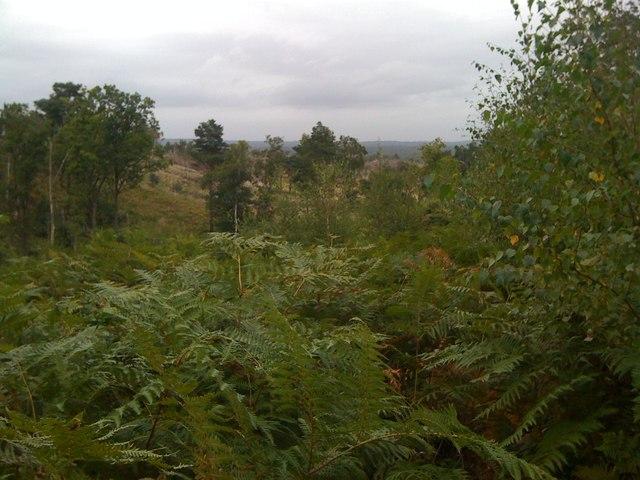 View across Chobham Ridges