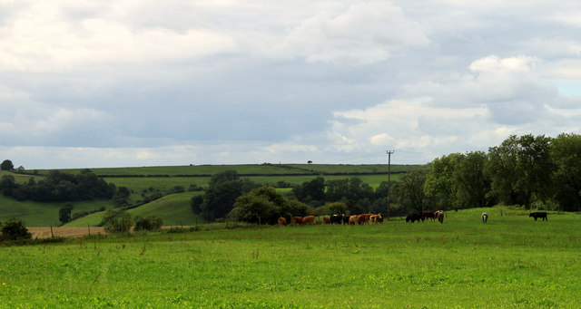 2011 : Pasture with cows from Cockpit Lane