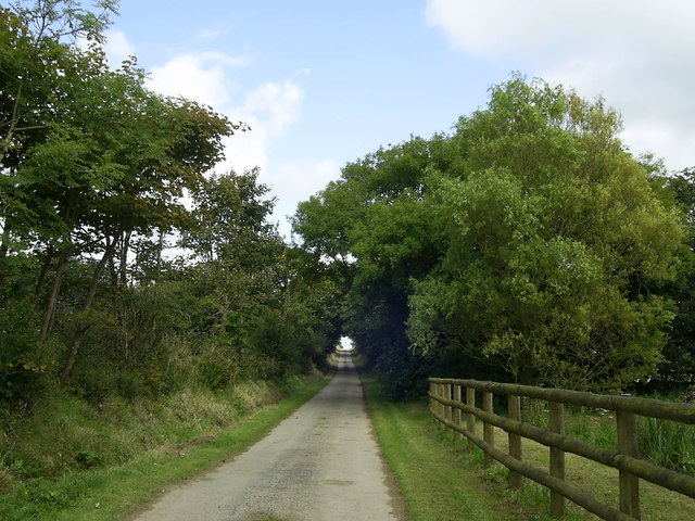 Tree-lined lane, Newton West